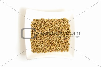white coriander in square white bowl isolated