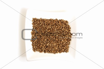 black coriander in square white bowl isolated