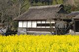 Temple with Yellow Flowers