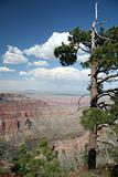 Grand Canyon Overlook with Trees