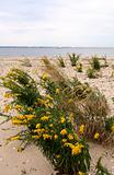 Beach Scenic Lined with Yellow Fowers