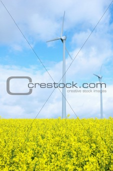 Windmill on Field of Gold