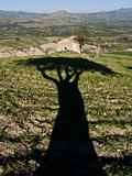 shadow of tree and rural landscape