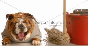 house training a bad dog