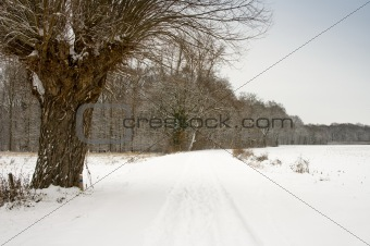 landscape covered with snow and pale sky