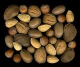 Mix nuts in shells: walnut, hazelnut, pecan, almond, brazil