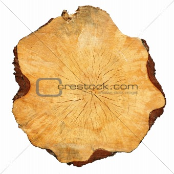 cross-sectional cut of tree