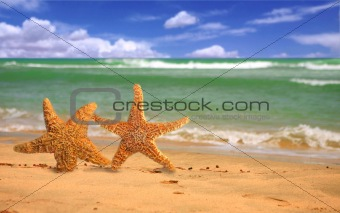 Pair of Starfish Humorously Walking Along the Beach