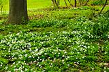 Spring flowers near creek