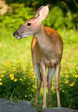 flowery doe