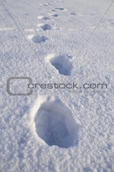 footprits