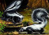 funny skunk