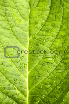 Waterdrop on a green leaf after rain