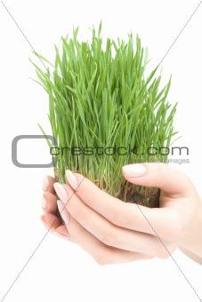 Beautiful growing grass