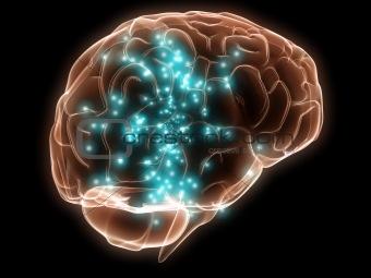 active human brain