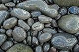 Pebbles on beach 0006