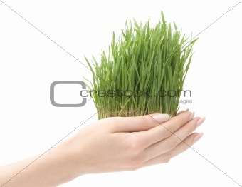 Beautiful growing grass