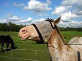 Head Up Horse