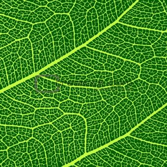 vector leaves macro texture