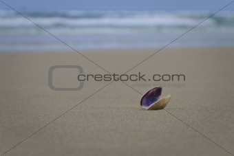 A lonely Shell on the beach.