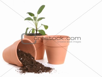 Clay Pots With Dirt and Seedling