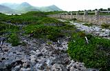 Coral and sea grape path to stone wall