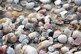 Sea shells as a background
