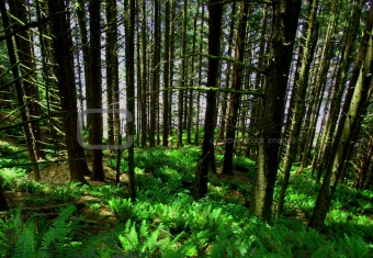 Grove of trees and ferns