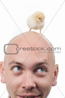 Baby bird on head
