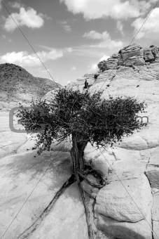 Close up on the Rocks with a Small Tree - Black and White