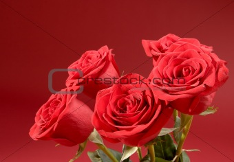 Bouquet of five roses on the red background