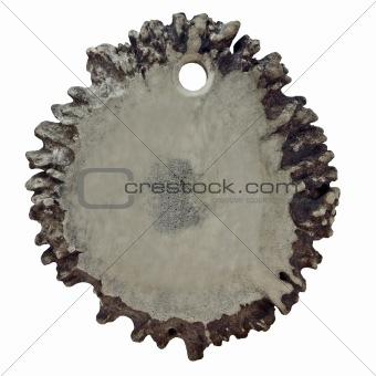 antler medallion