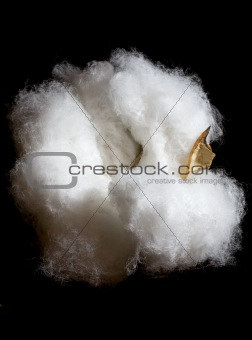 cotton