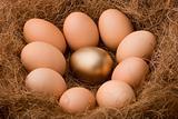 Egg series : One golden between nine ordinaries - zoom