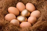 Egg series : Probability 2:8 - zoom