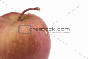 Single maggot comes out from the apple
