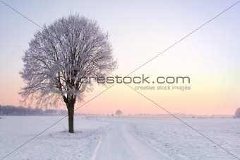 lone standing sunset winter tree
