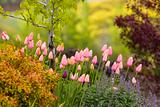 Spring Bulbs in a Beautiful Garden