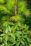 Vivid Planting