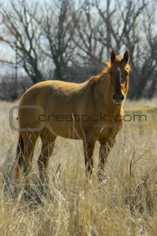 A horse in a field