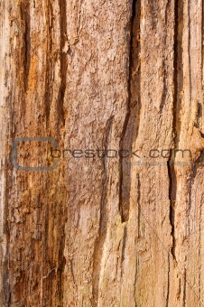 natural old bark