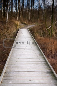 wooden forest bridge
