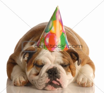 tired birthday dog