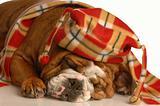 dog dressed up for winter