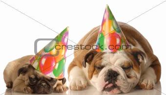tired birthday dogs