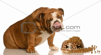 dog eating food