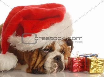 annoyed santa dog