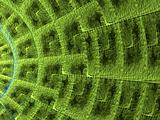 Green Static