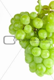 green grapes closeup