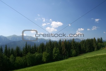 Beautiful mountain meadow forest view